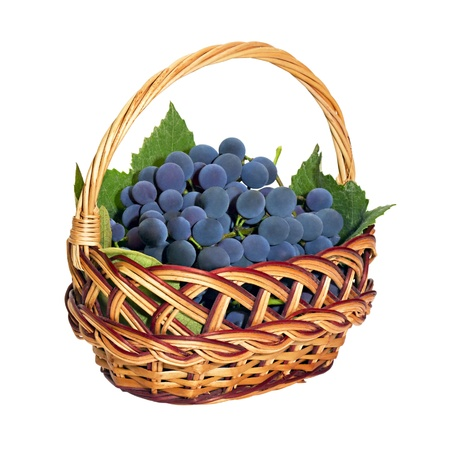 wicker basket with brushes of dark grapes isolated on white background photo