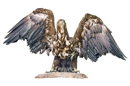 gevuld adelaar geïsoleerd op een witte achtergrond
