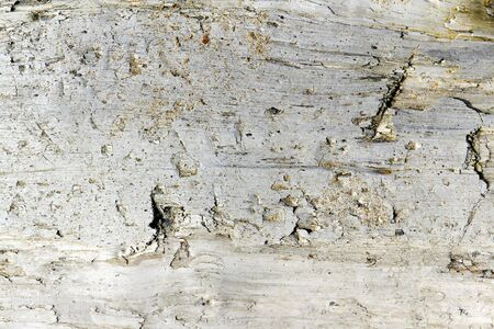 texture of old wood in the background photo
