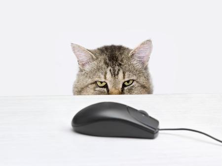 Kat jaagt een computermuis liggend op de tafel