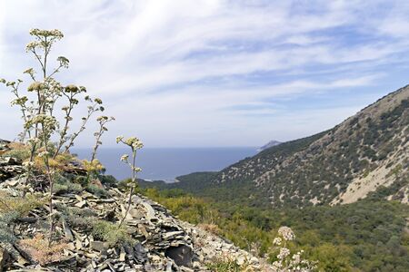 kavkaz: image sea view from the top of the hill Stock Photo