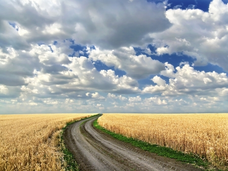 dirt: Dirt road in the middle of a wheat field