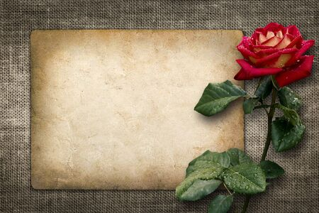 Card for invitation or congratulation with red rose in vintage style photo