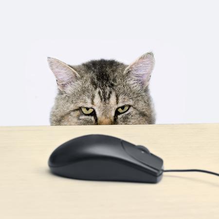 Kat jaagt een computermuis liggend op de tafel Stockfoto - 23211834