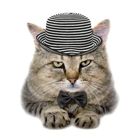 kat in een hoed en stropdas vlinder geïsoleerd op witte achtergrond
