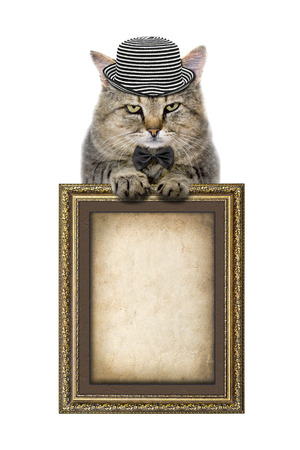 cat in a hat and tie butterfly relies on the picture frame isolated on white background photo