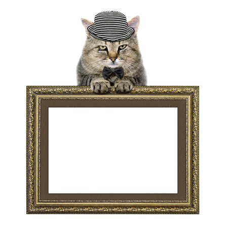 relies: cat in a hat and tie butterfly relies on the picture frame isolated on white background