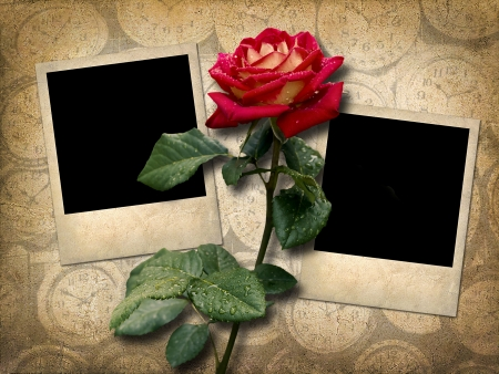 Two Polaroid-style photo  with red rose in vintage style photo