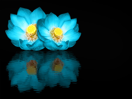 Indian lotus mirror reflection on black  photo