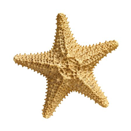 geological: starfish  isolated on white background