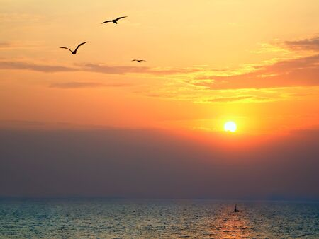 Sunset on the sea with seagulls soaring in the foreground photo