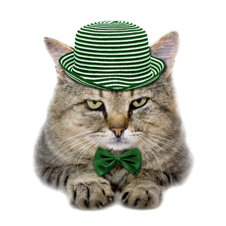 녹색 모자와 넥타이 흰 배경에 고립 나비 고양이