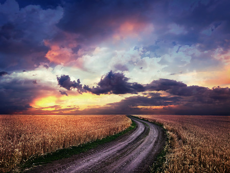 Dirt road in the middle of a wheat field photo