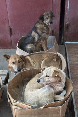roving: roving stray dogs sleeping in cardboard boxes Stock Photo