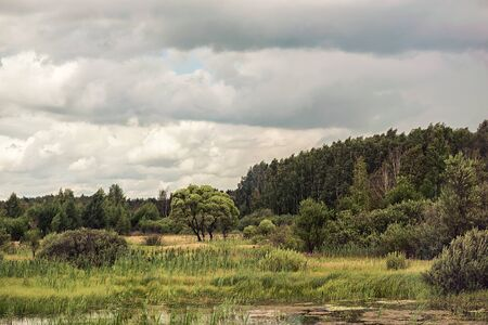 swampy: summer swampy forest landscape with cloudy sky Stock Photo