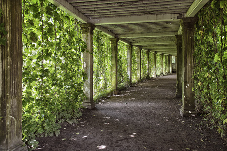 colonnade: colonnade with the old columns covered with ivy Stock Photo