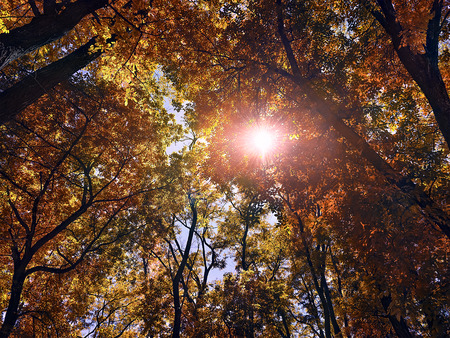 sun shines through the trees in the autum forest Stock Photo