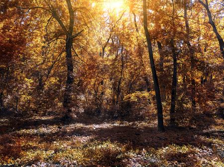 kleine open plek in de herfst bos verlicht door de zon Stockfoto