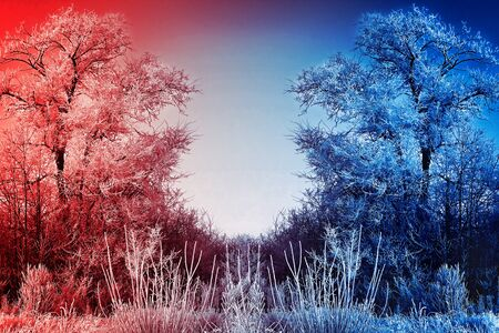 icy: Winter background with icy branches in the foreground Stock Photo