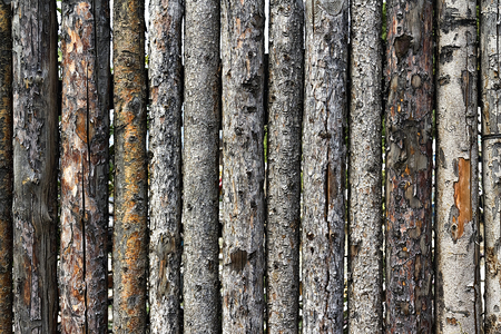 impregnable: fence made of logs with bark as background