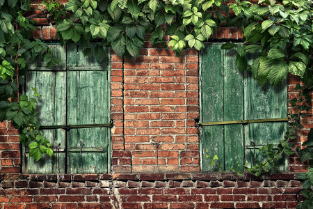 climbing plant on the old brick wall with windows Stock Photo