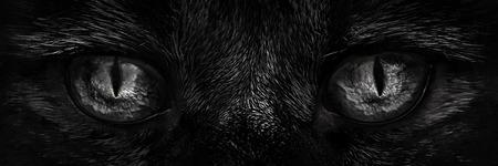 shaggy: shaggy monster eyes closeup
