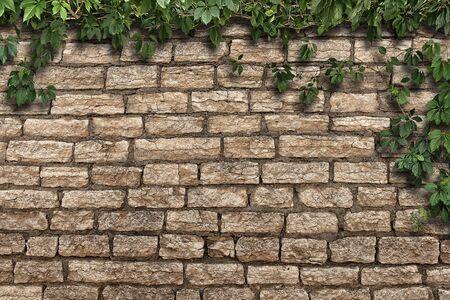 climbing plant on the old brick wall Foto de archivo