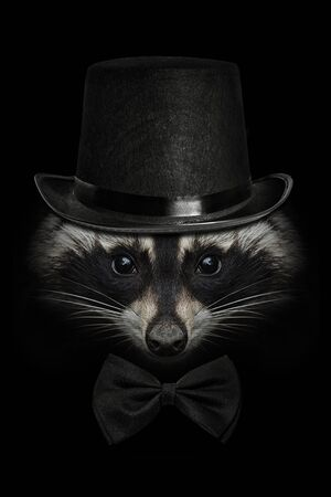 Raccoon face close up on black in a hat and tie butterfly