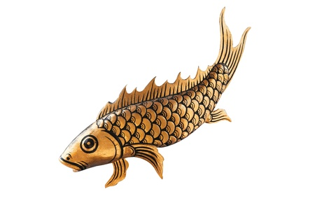 Fancy Carp koi gold