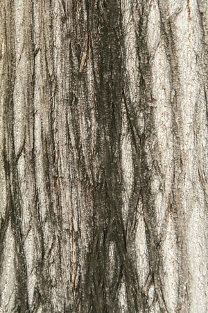 Bark moss Texture with direct light Stock Photo - 12902367