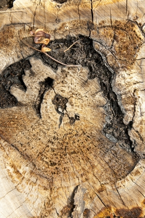 Top view of a tree stump very old photo