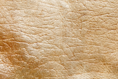 The Leather texture closeup with detail . Stock Photo - 13709952