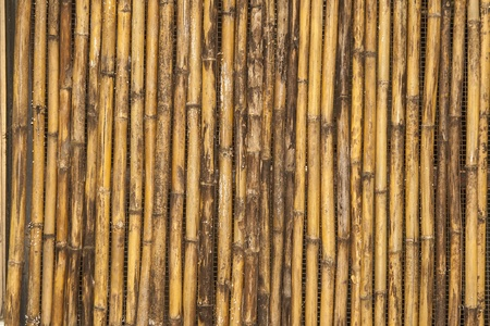 old bamboo texture vertical line Stock Photo - 13709954