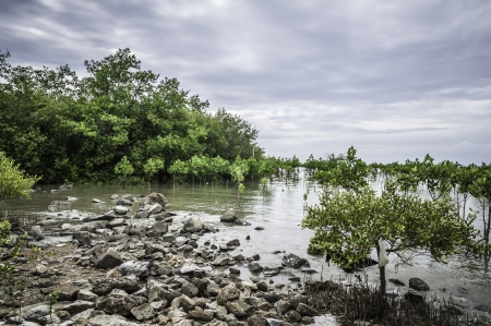 A mangrove forest in blue sky you can feel abundance and species in the ecosystem by technic HDR photo
