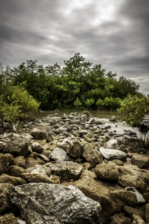 A mangrove forest in blue sky you can feel abundance and species in the ecosystem by technic HDR Stock Photo - 14635045