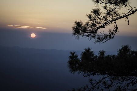 Pine tree silhouette on mountain sunset, twilight on the mountain