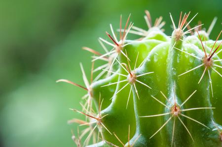 Close up Garden Cactus - Stock Image