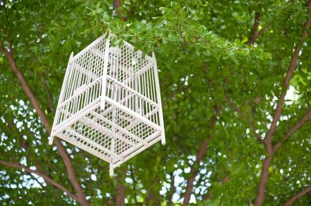 Wood White cage on tree . Stock Photo