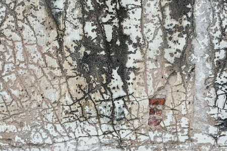 fissures: Cracks and Fissures with die moss .