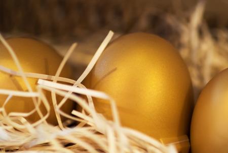 Golden egg in nest . Feel look lucky. photo
