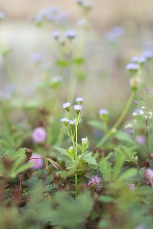 An Daisy Against Vivid Green Grass . Stock Photo