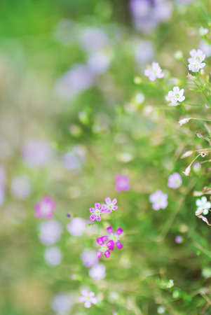 An Small Flowers Bed in sunlight .