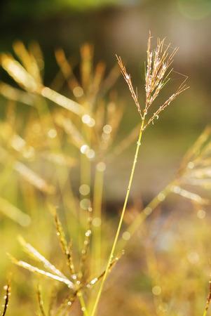 Una margarita contra Vivid Green Grass.