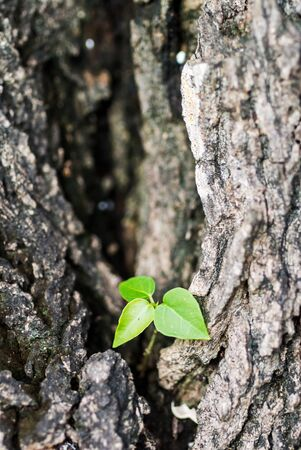 new generation: Small tree on big tree new generation . Stock Photo
