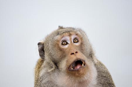 sorprendido: Una emoción mono sorpresa de cara completa.
