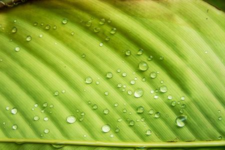 drop in: An Leaf wet water drop in soft light . Stock Photo