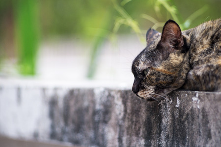 An Old cat with nature place .