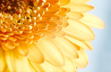 Beautiful spring gerbera flower on cloudy blue background with copy space photo