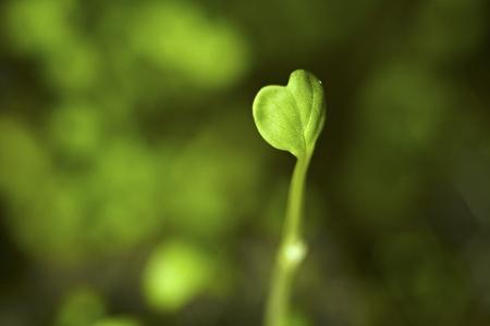 burgeon: Heart shaped burgeon symbolizing growth Stock Photo