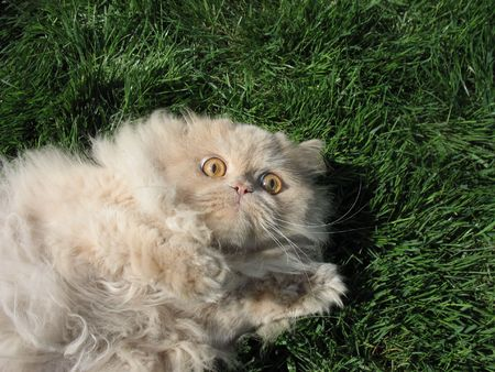 peril: afraid cat rests upon green lawn Stock Photo